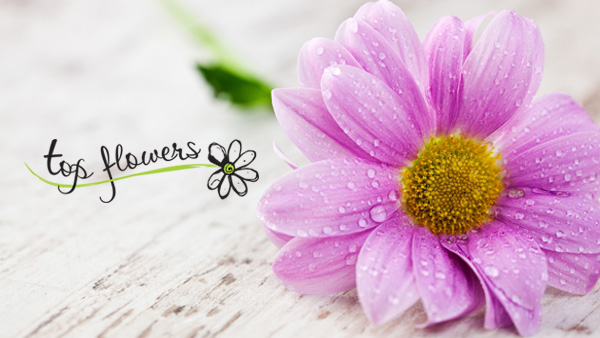 Top Flowers - flowers delivery